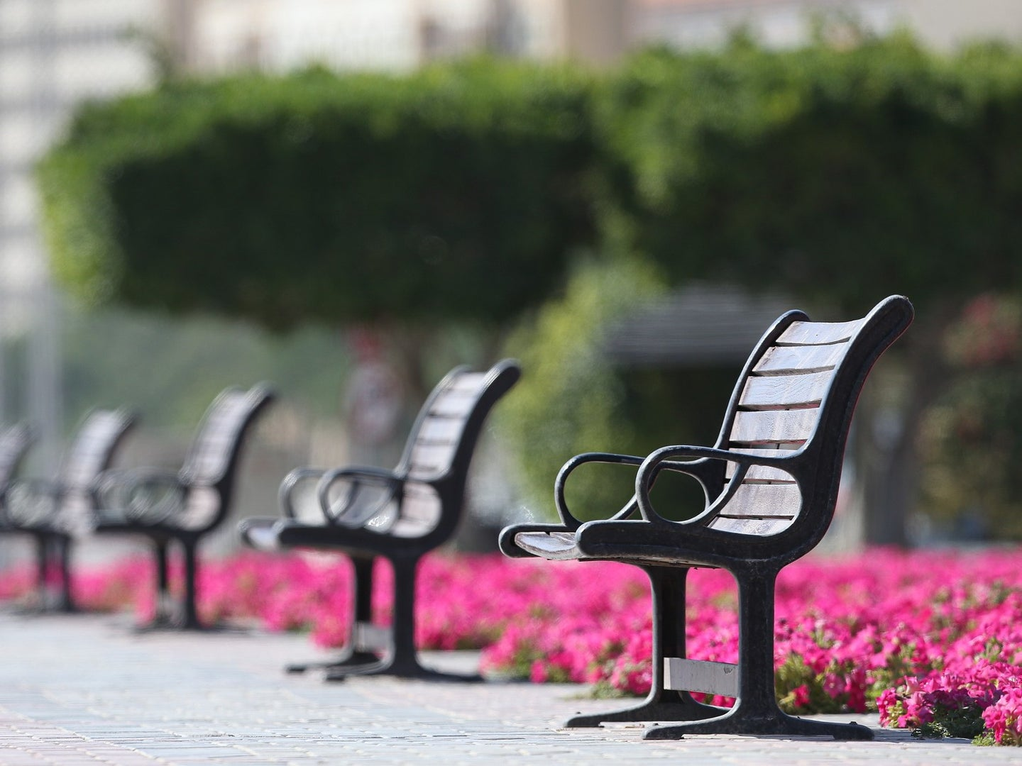 empty benches at a park
