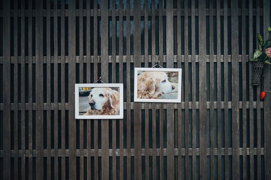 dog photos on a wall