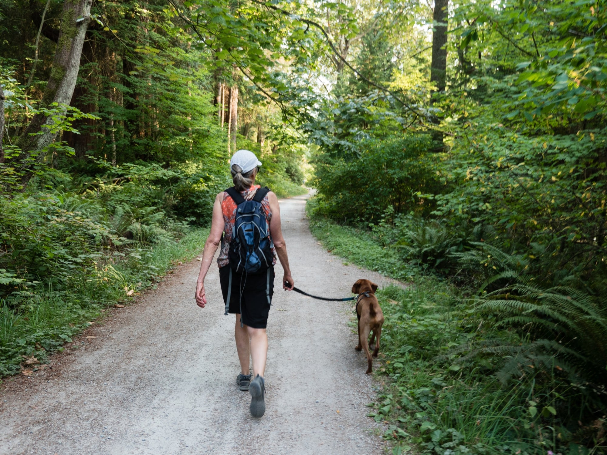 a person walking a dog along a trail in the forest