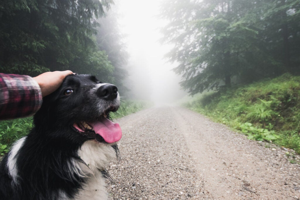 a person petting a dog as they walk on a misty trail through the forest