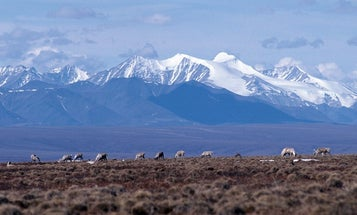The Trump administration opened the Arctic National Wildlife Refuge to oil companies—but none may bite