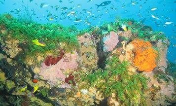 This giant Gulf of Mexico reef is a conservation success story—here's why it's thriving