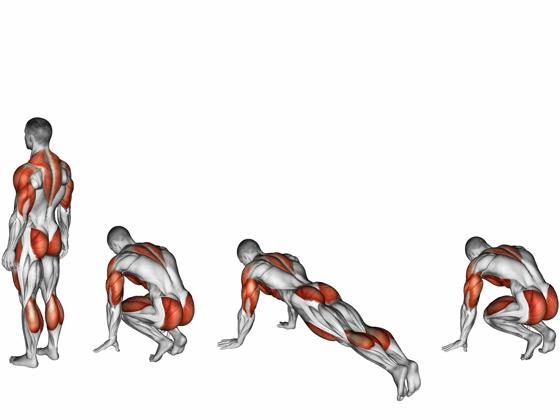 A diagram of all the muscles engaged during a burpee