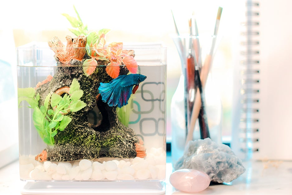 fish in a fish tank
