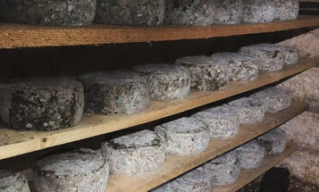 When specialty cheesemaking becomes a quarantine pastime