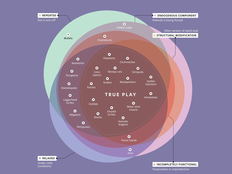 animal play graph