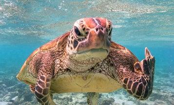 9 goofy, award-winning animal photos to turn your day around