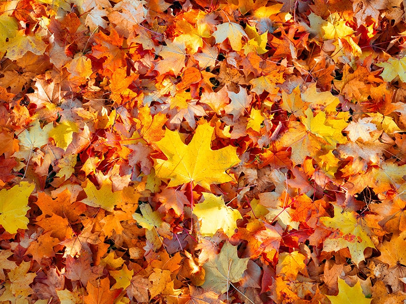 orange and yellow leaves on the ground