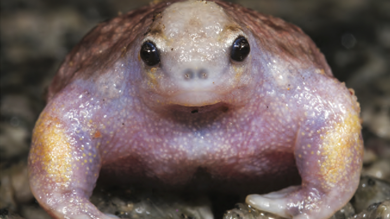 These buff frogs never skip arm day