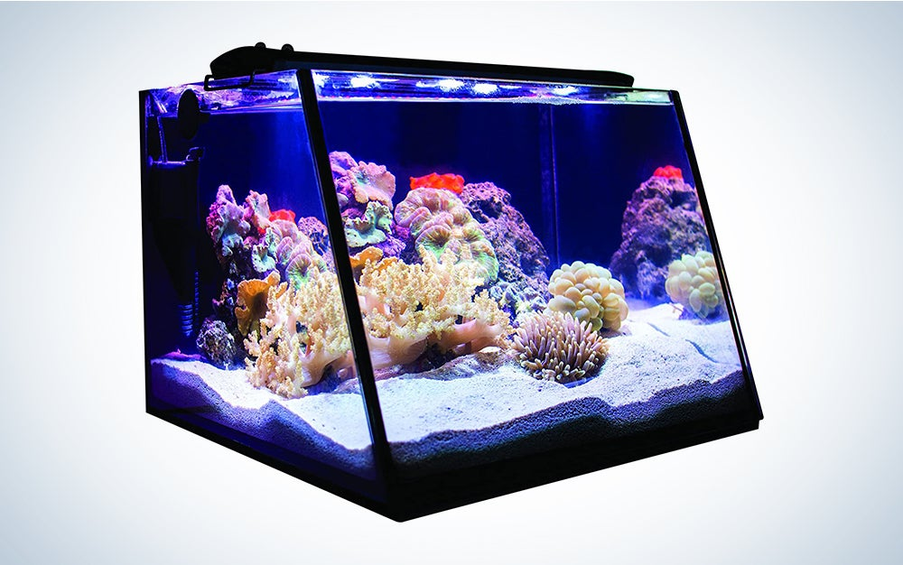 Lifegard Aquatics Full-View 5 Gallon Aquarium with LED Light Heater Thermometer, Net & Built-in Back Filter with Pump