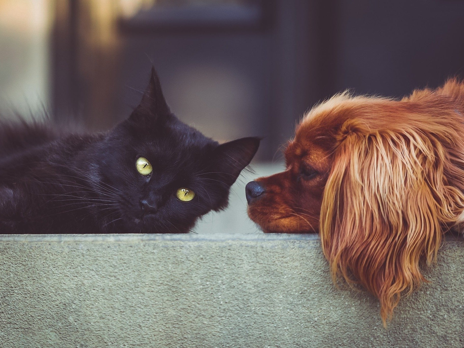 Some identify strictly as cat-people or dog-people. What's your preference?