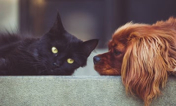 What being a cat- or dog-person says about you