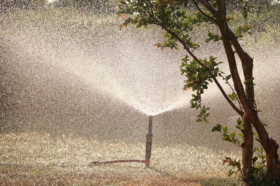 sprinkler and a tree