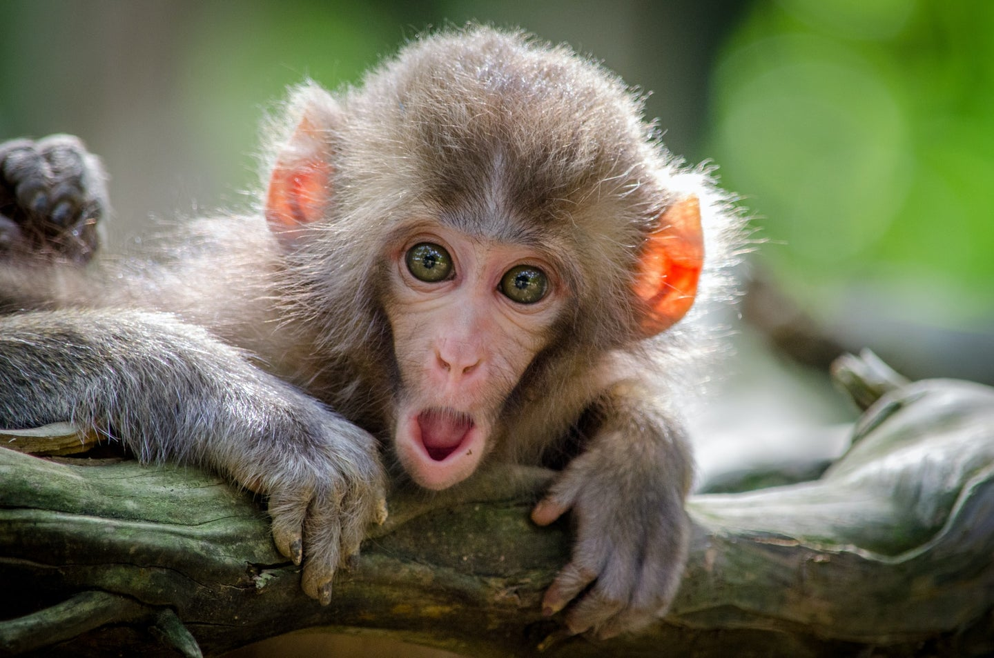 A small monkey looking surprised