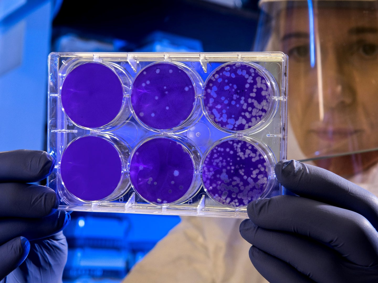 A scientist holds up a lab apparatus with virus samples.