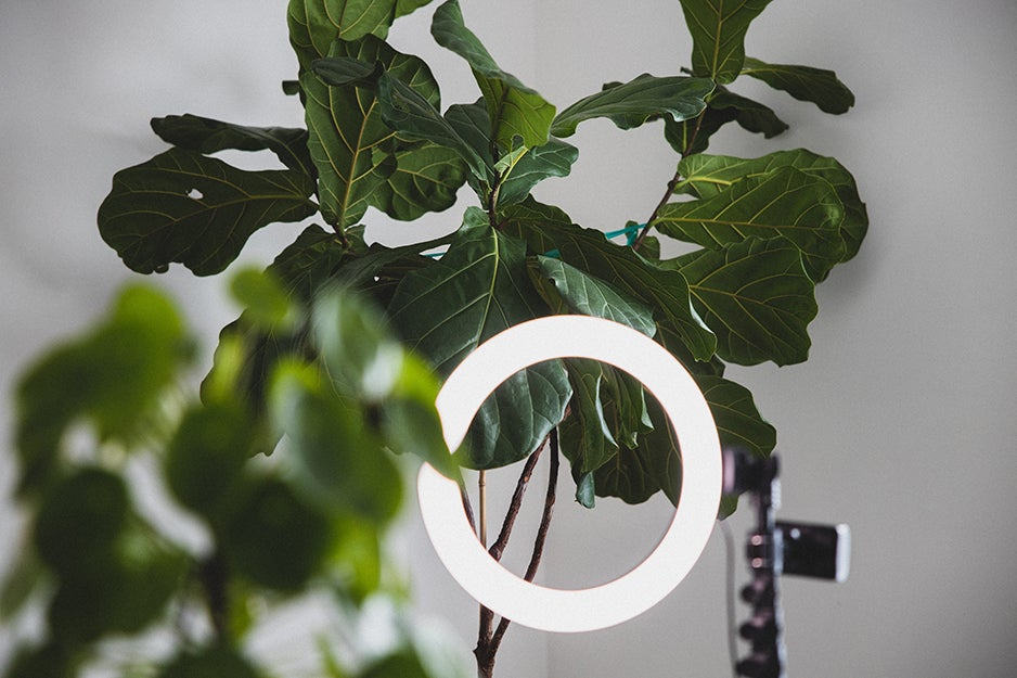 selfie ring light near a leaf