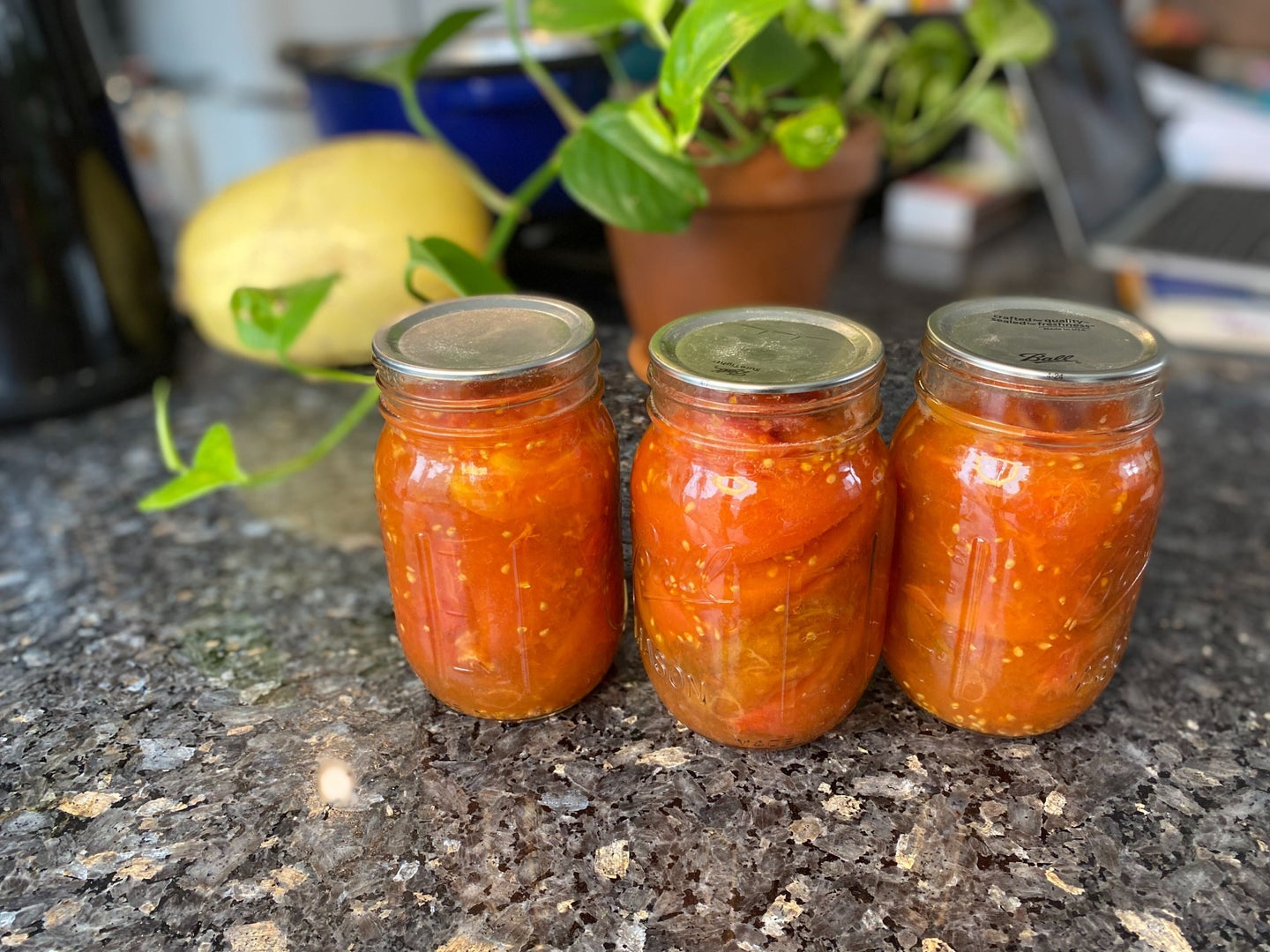 canned tomatoes in jars on a marble countertop near a plant