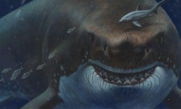 Could an ancient megashark still lurk in the deep seas?