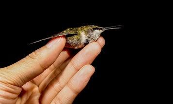 How to help an injured bird