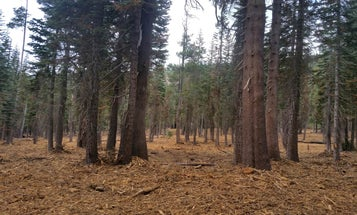 Healthy forests do more than just prevent wildfires
