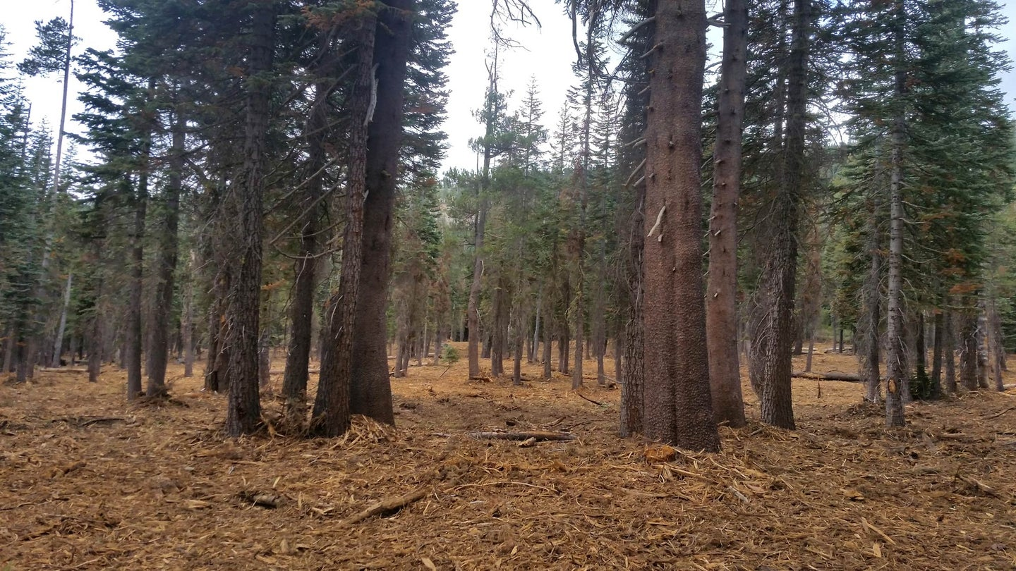 mixed-conifer forest