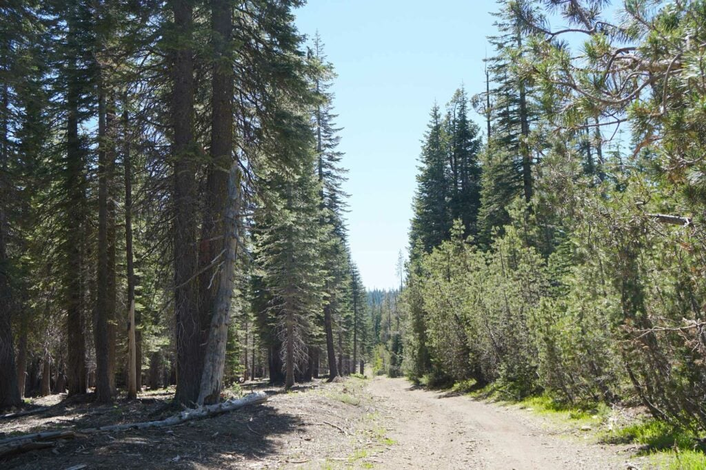 Sierra Nevada trees