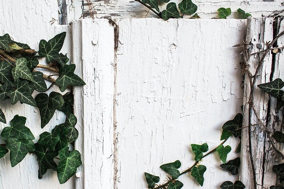 door with vines
