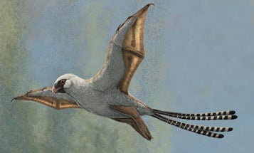 Dinosaurs may have evolved into birds, but early flights didn't go so well