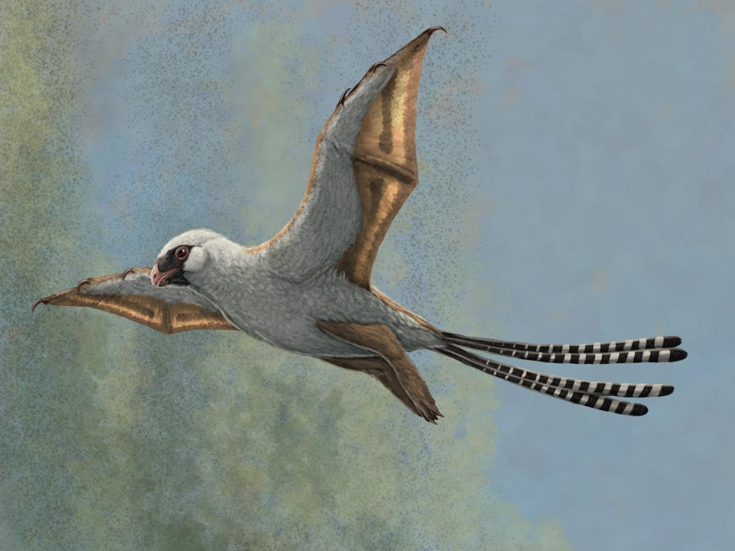 A reconstruction of Ambopteryx in a glide.