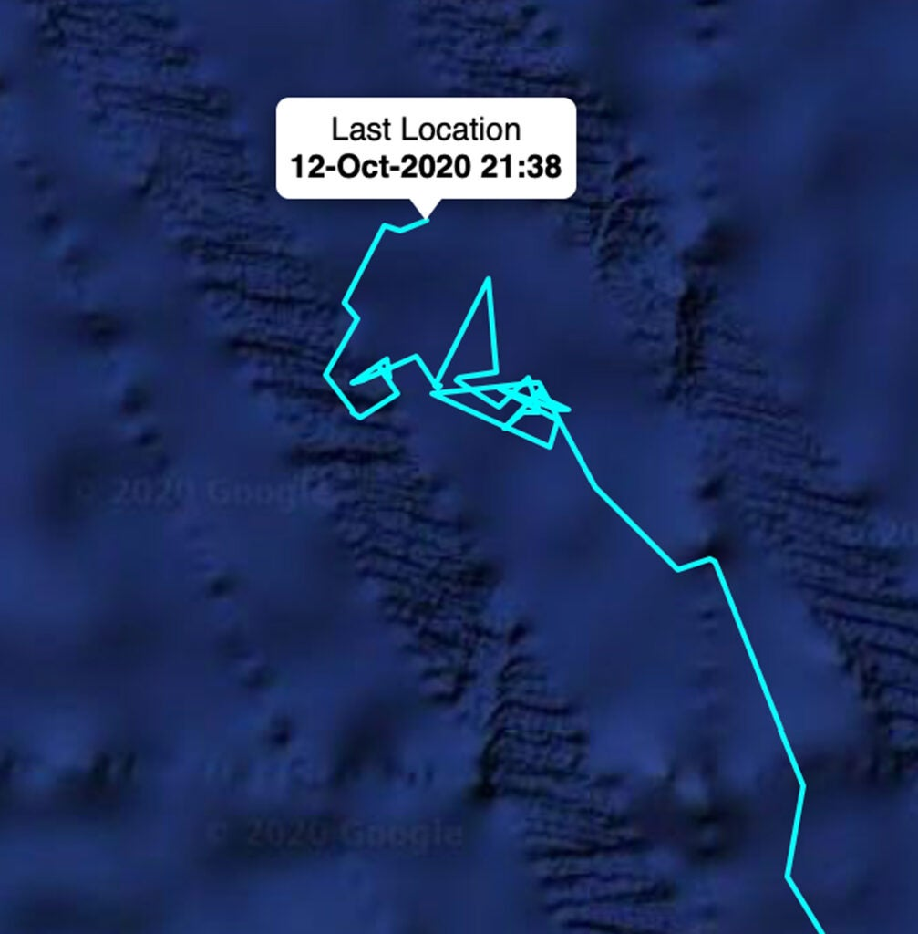 southern right whales tracking