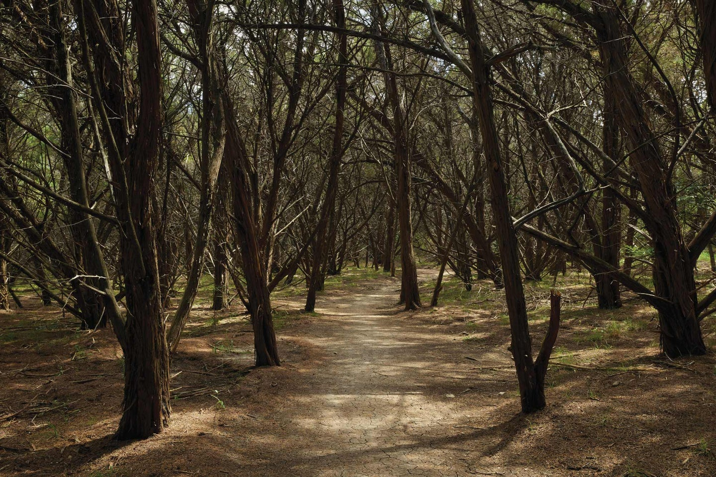 trees and path