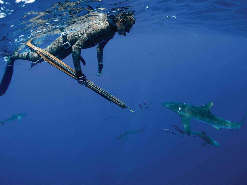 A spearfisher swims underwater with sharks in the distant waters.