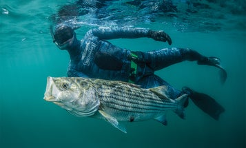 Take a stab at spearfishing with these tips