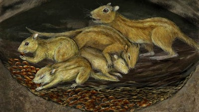 These prehistoric rodents were social butterflies