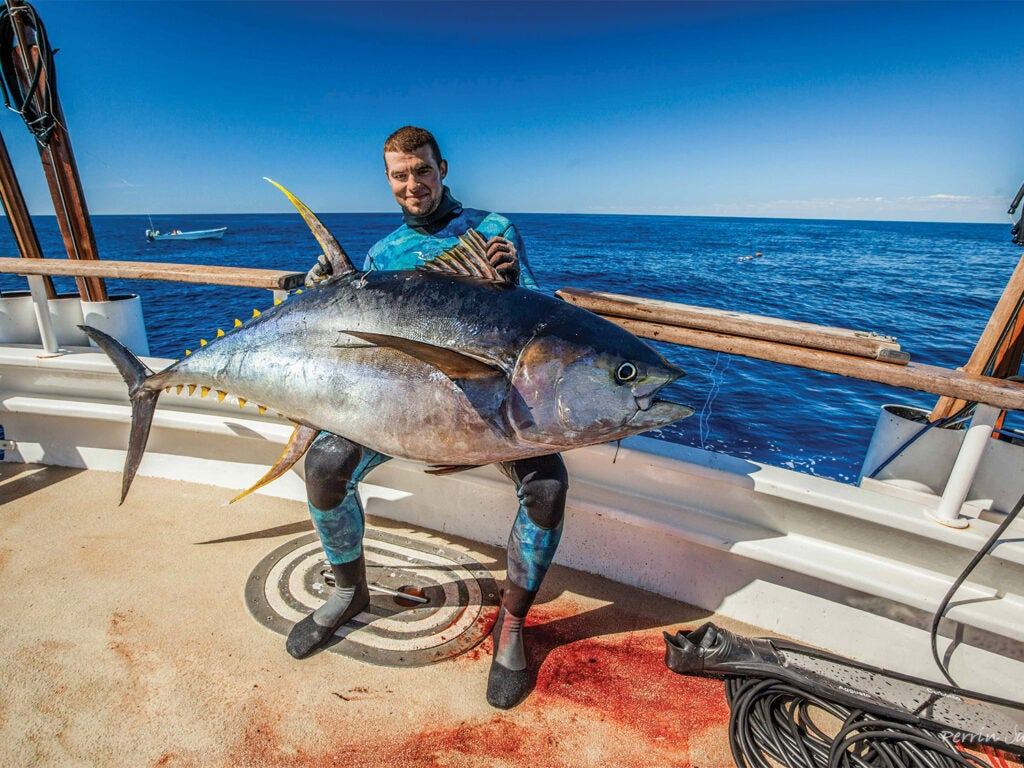 A spearfisher sits boatside and holds a large yellowfin tuna in their lap.