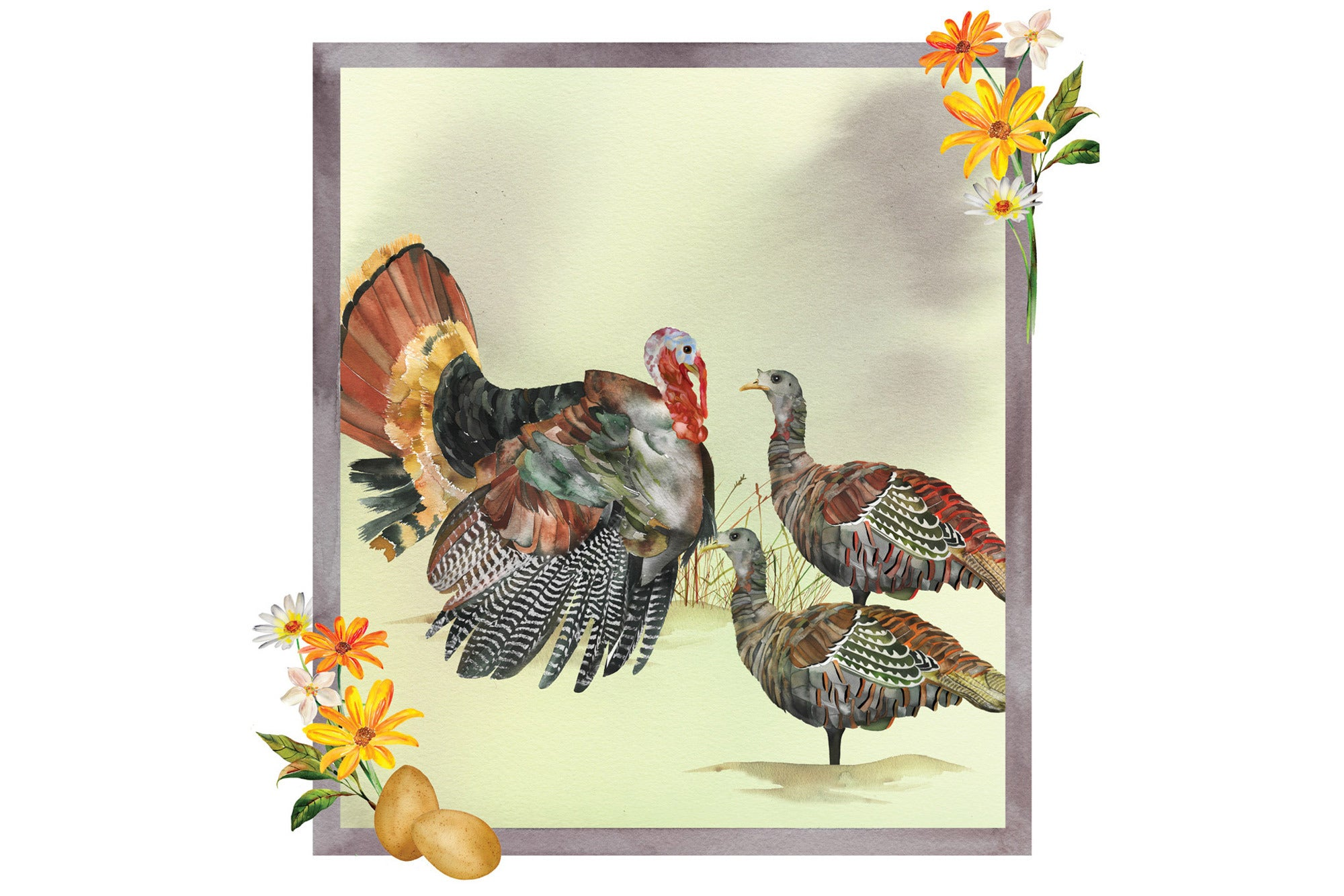 An illustration of a male wild turkey with two hens