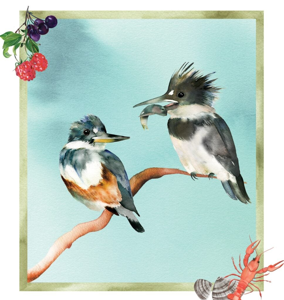 An illustration of a male kingfisher offering a female a catch