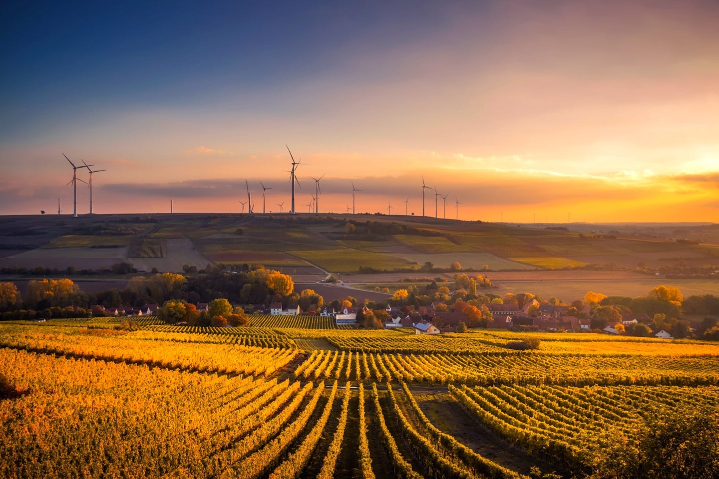 agricultural field with wind farm in background at sunset
