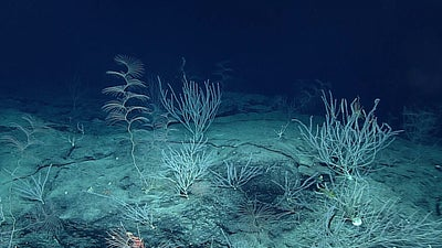 Researchers found signs of human pollution in animals living six miles beneath the sea