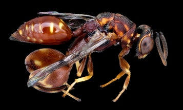 The US is running out of wasp venom. That's bad.