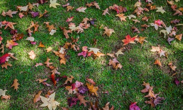 Climate change is affecting fall foliage, but not in the way you think