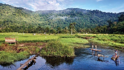 The fight to stop the next pandemic starts in the jungles of Borneo