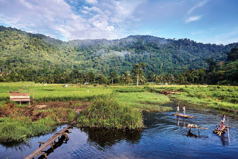 Borneo's Gunung Palung National Park
