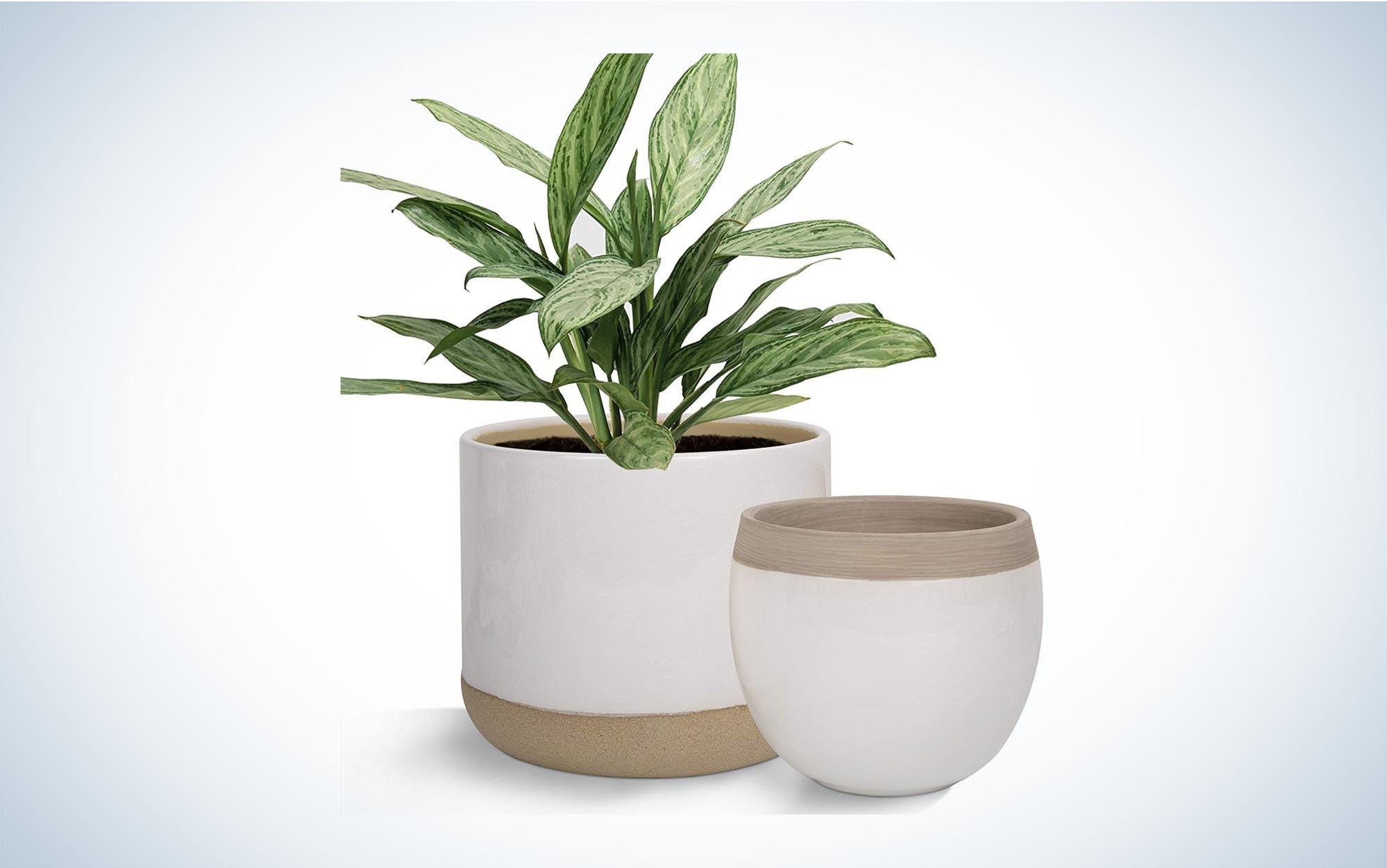 White Ceramic Flower Plant Pots