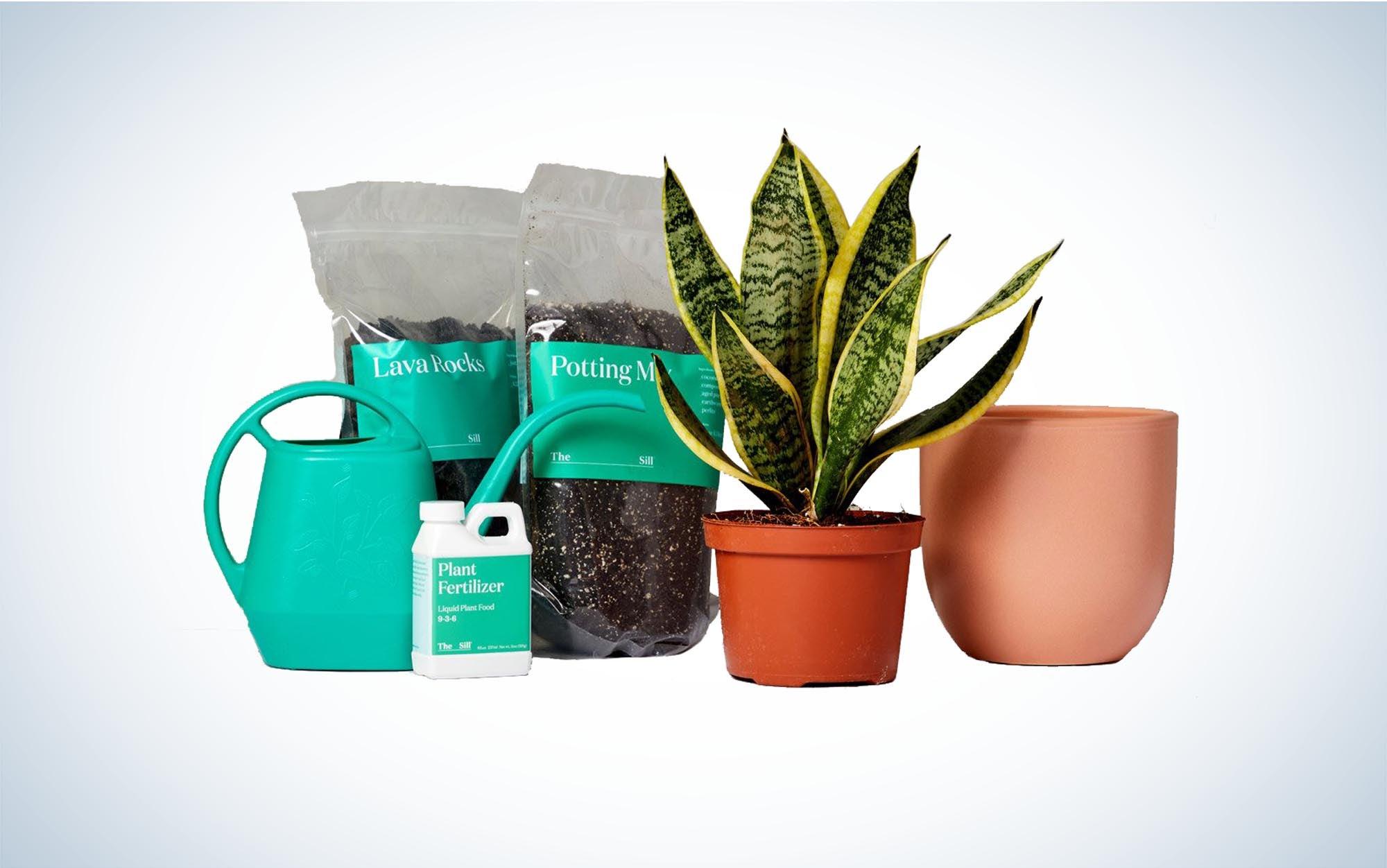 Plants and fertilizer