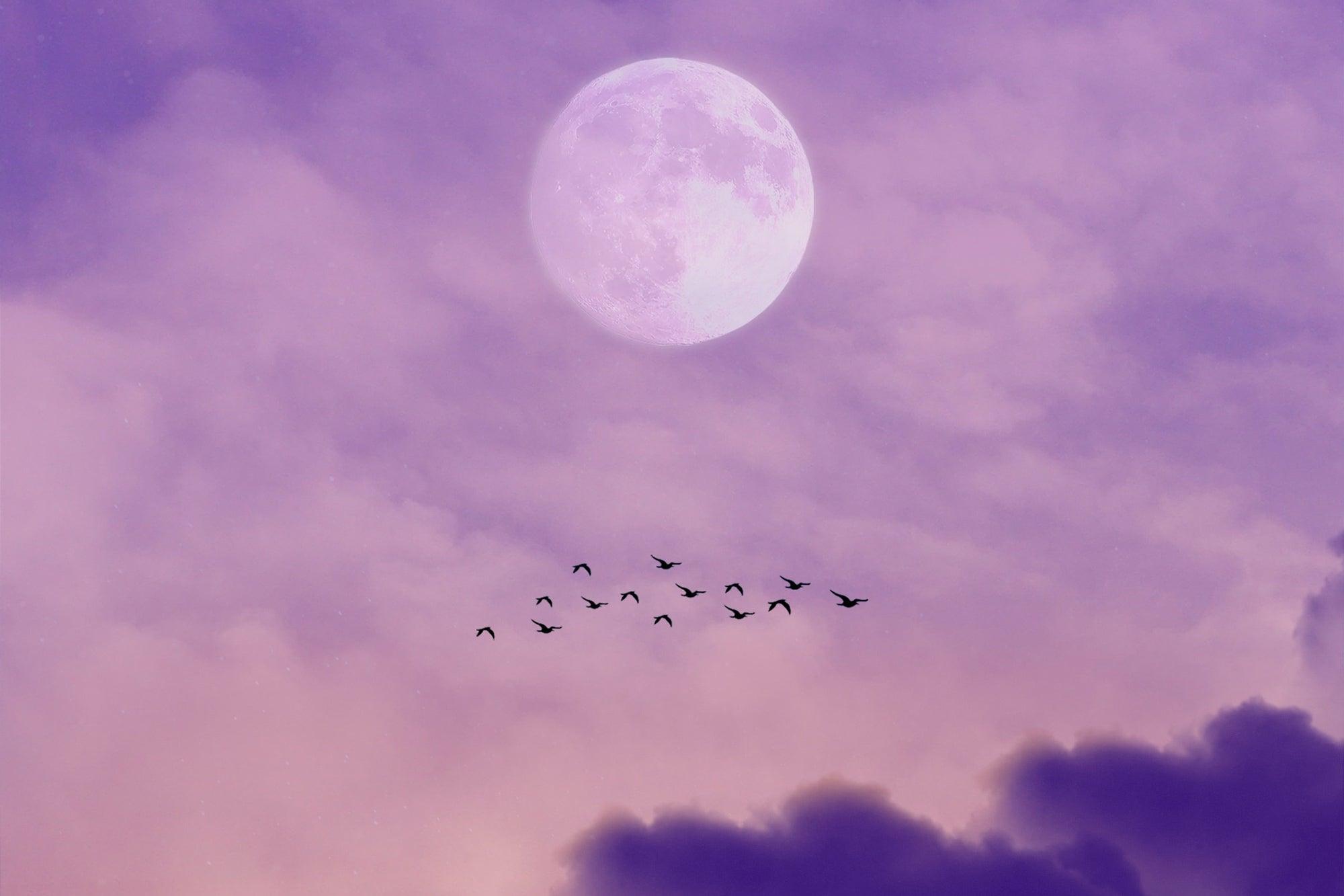 birds flying under the moon