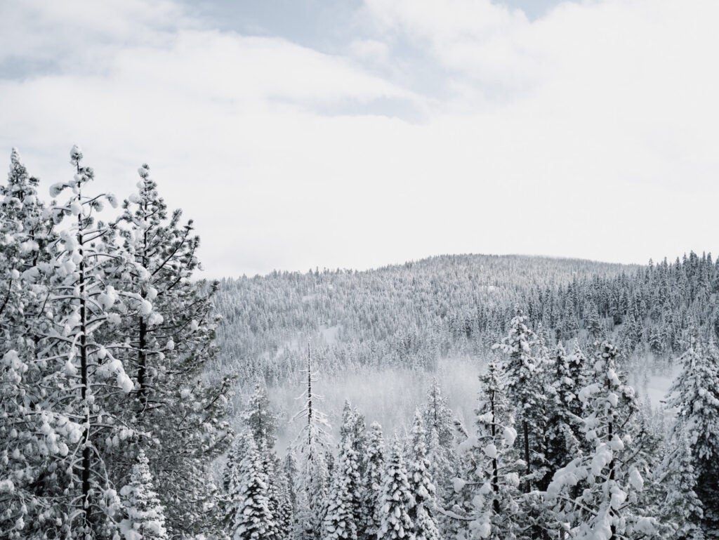 a wilderness forest covered with snow in the winter