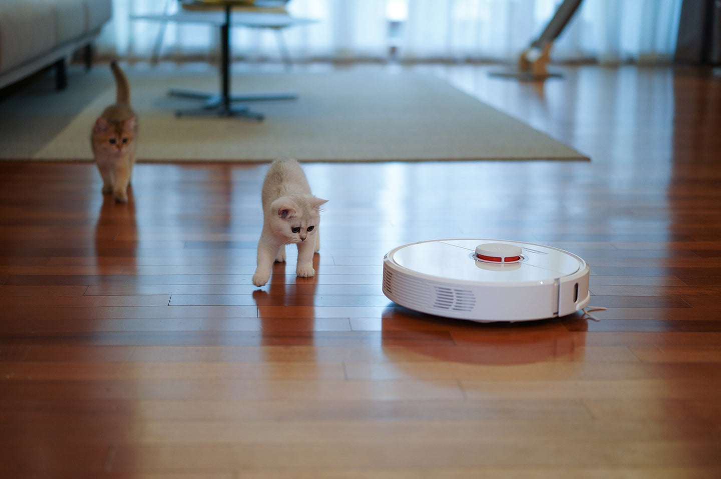 The best robot vacuum on a wood floor with two beige cats