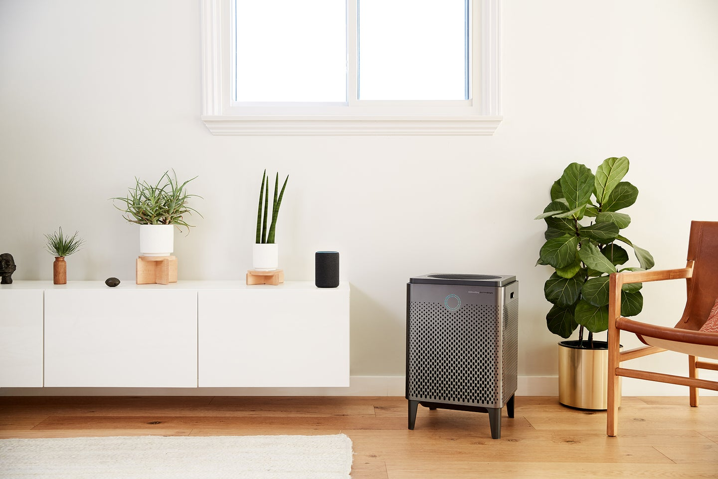 grey Coway air purifier in a living room with plants