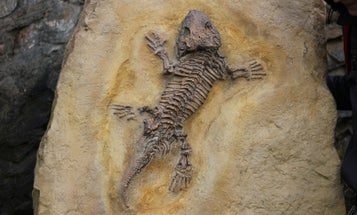 How fossil preservation and public health are intertwined